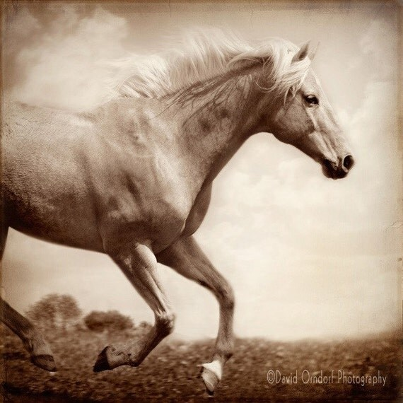 Horse Photograph -Palomino 3/4 study - Horse Profile - Fine Art Print - 8x8 - Animal photography