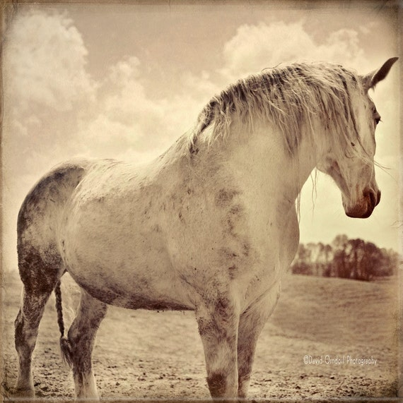 Horse Photograph - Horse Portrait - Horse Profile - Fine Art Print - 8x8 - Animal photography - Rosie - Earth Study
