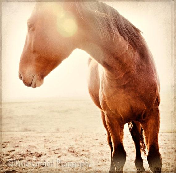 Horse Photograph - Horse Portrait - Horse Profile - Fine Art Print - 8x8 - Animal photography - Moose the Muzzle