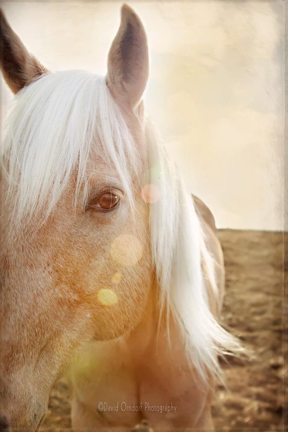 The Return of the 60's Flip. . .- Palomino - Horse Portrait - Fine Art Print - Palomino Mane - 8x12 print