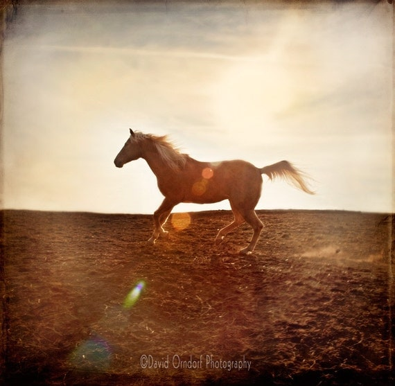 Horse Photograph -Horse running - Horse Profile - Fine Art Print - 8x8 - Animal photography - Horse in Landscape 1