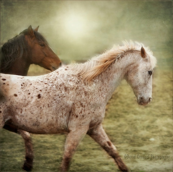Horse Photograph -Horses running in the fog - Fine Art Print - 8x8 - Animal photography - Chuck & Red Fog Study 1