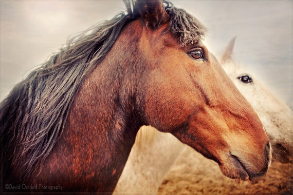 Horse Photograph - Horse Portrait - Horse Profile - Fine Art Print - 8x12 - Animal photography - Red-Head