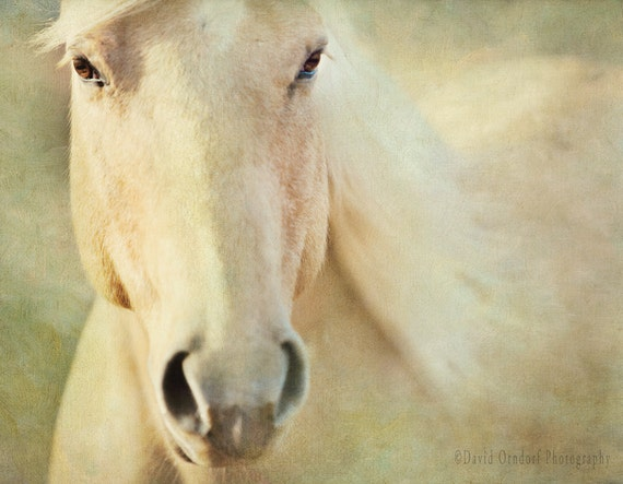 Horse Whisper - Horse Photography - Animal Portrait - 8x10 Fine Art Print