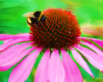 MakeforGood Bumble bee print with summer echinacea flower, fine wall art home decor, childrens floral photo painting
