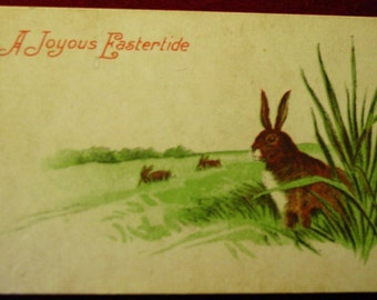 Vintage Easter Postcard Rabbits In Tall Grass