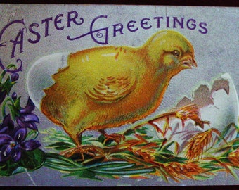 Vintage Easter Postcard Baby Chick Hatching