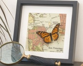 San Francisco Map with real framed Monarch Butterfly