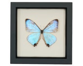Butterfly Decor Framed Insect Display
