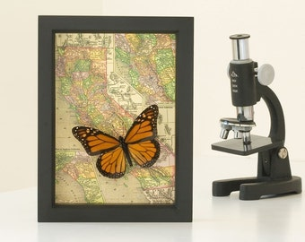 Map of California with Framed Monarch Butterfly in museum display