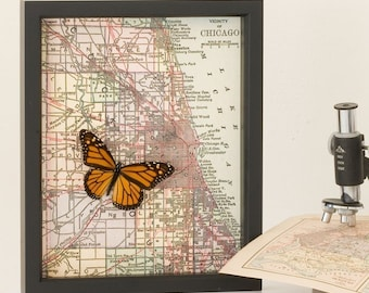 Old Map of Chicago with Real Monarch Butterfly