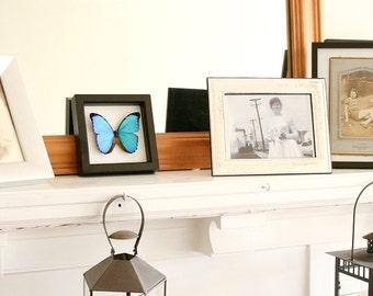 Framed Blue Morpho MORPHO MENELAUS Real Butterfly Shadowbox Frame