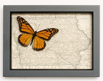 Framed Butterfly with Map of Iowa