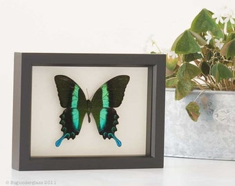 Electric Green Framed Butterfly Shadowbox