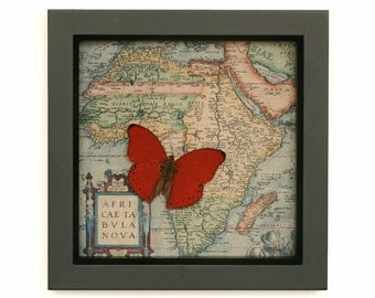 Map of African with Sangria butterfly Cymothoe sangaris