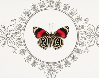 Framed Butterfly with Archival Print