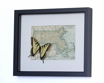 Vintage Map of Massachusetts with framed butterfly