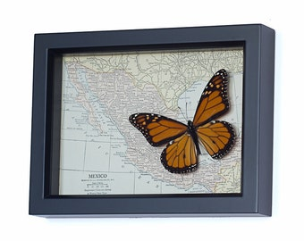 Real Framed Monarch Butterfly with Vintage Map of Mexico