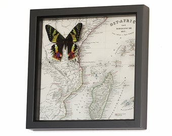 Old Map of Madagascar with Sunset Moth, Wall Art, Natural History Art