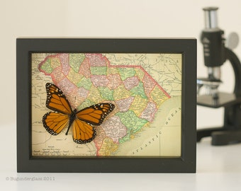 Map of South Carolina with Monarch butterfly
