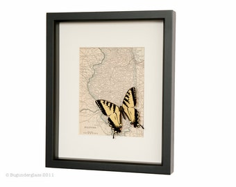 Map of Illinois with Real Butterfly