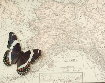 Framed Map of Alaska with Native Real Butterfly
