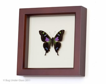 Purple Mountain Framed Butterfly Decoration. Insect Wall Art