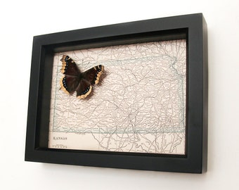 Vintage Kansas Map with framed butterfly