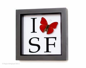 Personalized With Any Initials You Want Framed Butterfly Display