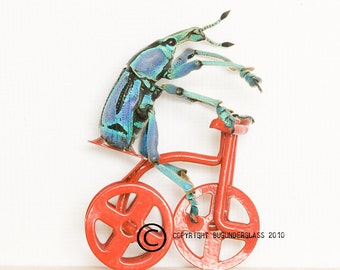 Real Beetle Riding Red Tricycle Natural History Insect Art