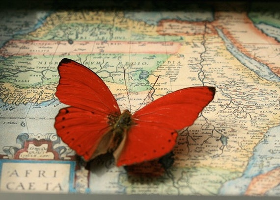 Old African Framed Map with red glider butterfly