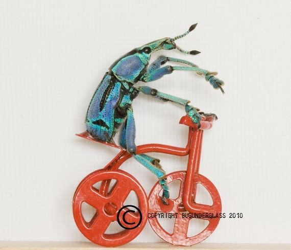Framed Beetle Riding a Tricycle Insect Art