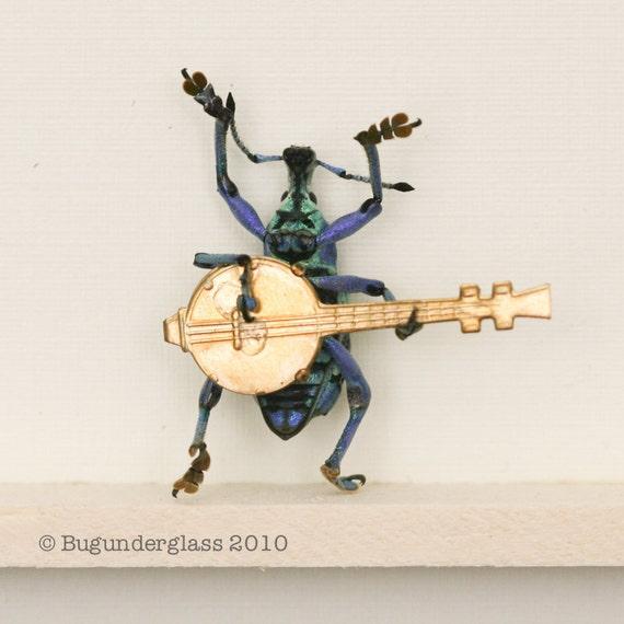 BANJO BEETLE a Weevil Playing a Banjo