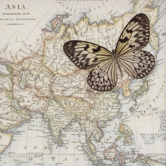 Framed Map of Asia with Real Native Butterfly Natural History