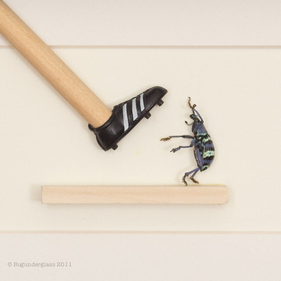 Last Call -- Insect Diorama - Beetle Meets a Shoe