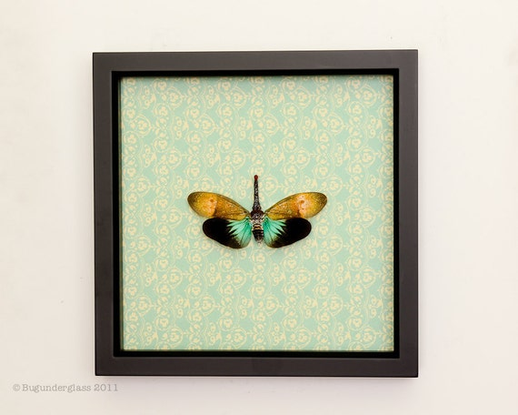 Real Insect Art Lantern Fly Pattern Print