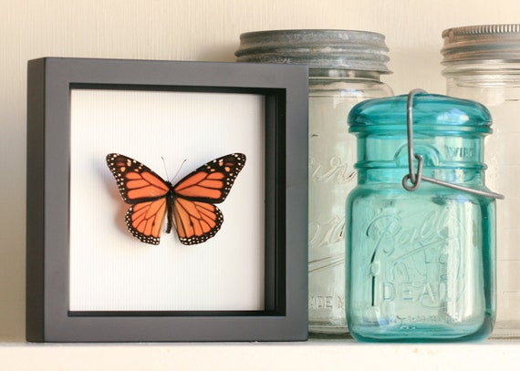 Butterfly Shadowbox Real Monarch Butterfly Display