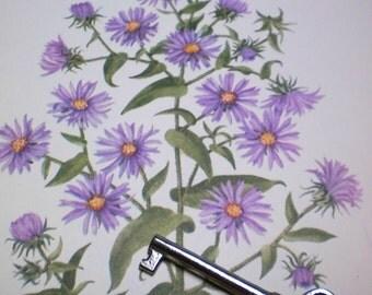 Vintage Botanical Plates Wild Flowers of America Yarrow New England Aster 2 Sided Mary Vaux Walcott 8 X 11 plate 373, 374 Spring White