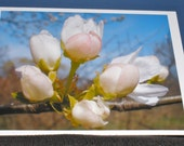 Blossom Blank Note Cards (set of 6 with envelopes)