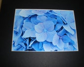 Hello Hydrangeas 5x7 photo w/8x10 mat
