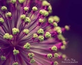 Flower Photography, Purple and Lime Green, winter home decor, bold plum, bright floral lavender, Living room decor