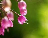 Flower Nursery Decor Photograph - pink lime green sage forest dark green bright fuschia yellow floral macro nature white 8x10