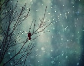 LARGE Winter Landscape Photography - Out in the Cold -  tree nature navy midnight blue white black bird tree branches snow flakes gray fall