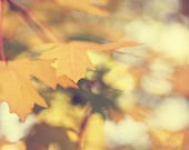 Fall Leaves Nature Photograph - Postcard golden tree leaf 4x6 CLEARANCE sage pale green fall autumn harvest pastel oak changing season