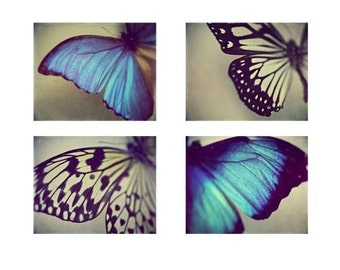 Butterfly Wing Photography - Set of 4 Nature Photographs - black white vivid royal blue teal aqua butterfly bug insect animal fall autumn