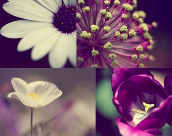 Bold Purple Flower Photography Print Set (number 2) - Set of 4 Photographs - 5x7 and 5x5 - Spring Flowers Daisy Tulip on Metallic Paper