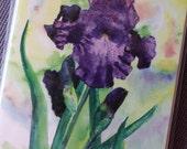 Purple Iris Glow Watercolor Notecards Set of 6
