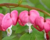 Bleeding Hearts Floral Photo Greeting Card