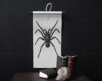 Miniature Natural History Chart --- Tarantula