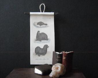 Miniature Natural History Chart --- Walrus